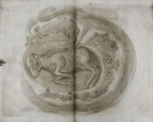 Tavola tratta dal De Formato Foetu di Hieronymus Fabricius ab Aquapendente, 1604